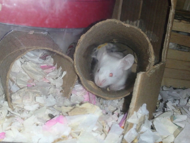 Dotty's Litter!!  - Page 3 20170131