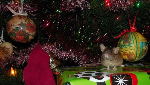 Frog poses so well... Dscn8614