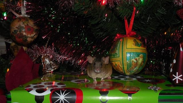 Frog poses so well... Dscn8616