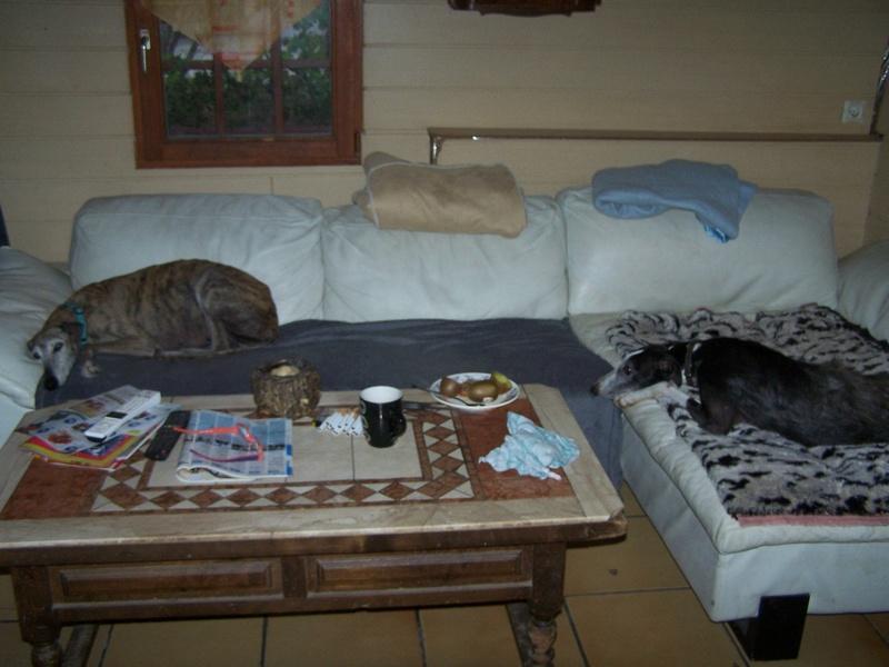 DIXIE........... petite barbuda en famille - Page 4 Tara_810