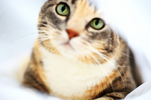 Daisyleap, WindClan medicine cat _actua10