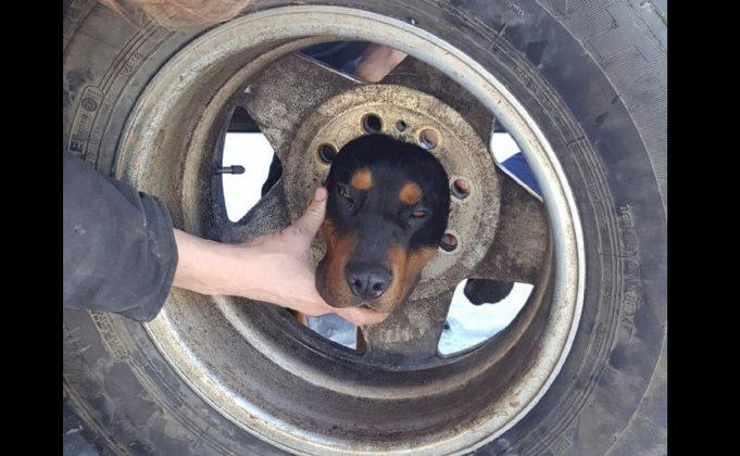 BaDoGood плохая-хорошая собака - Портал Blaze-10