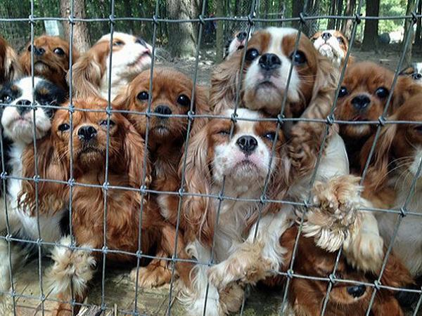 BaDoGood плохая-хорошая собака - Портал Puppie10
