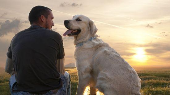 BaDoGood плохая-хорошая собака - Портал Ya-eo-10