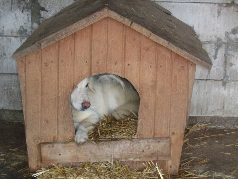 BALANUCH, mâle croisé berger sauvé de Pallady, né en 2009 parrainé par Nathalie G. -Gage Coeur  Myri_Bonnie-SC-R-SOS- 15232011