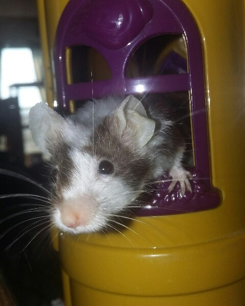 Post your pics for Mouse of the Month!!! - Page 2 Img_2012