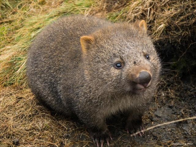 Animaux  peu connus d'Australie : L'adorable  quokka et d'autres ... Cradle10