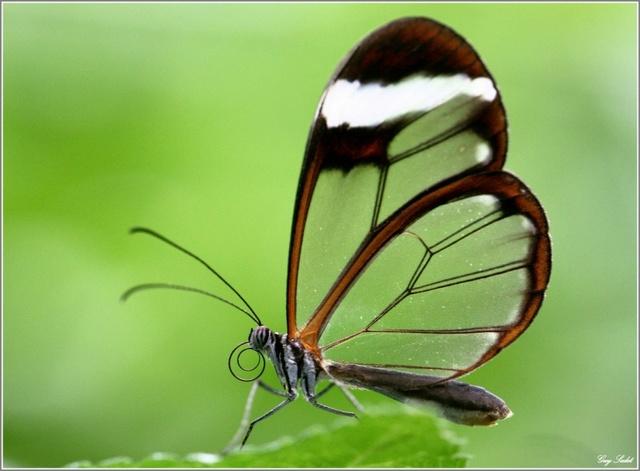 Insectes bien étranges   :  Greta-10