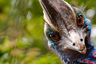 Encyclopédie des oiseaux Ob_51810