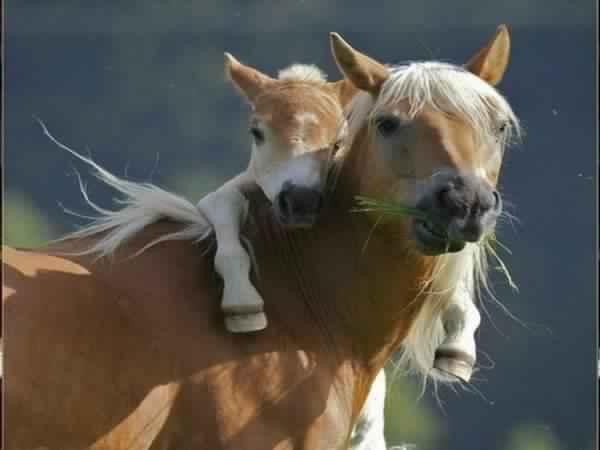 Un cheval  .. des chevaux   Photo-10