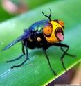 Insectes bien étranges   :  9effb510