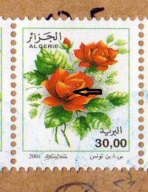 belles roses et autres Copie_10