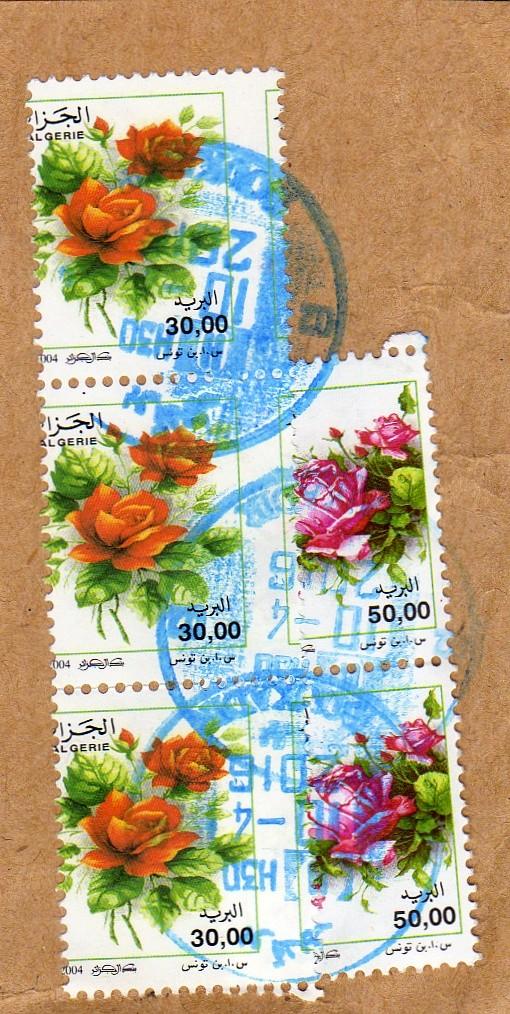 belles roses et autres Img00610