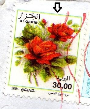 belles roses et autres Img01410