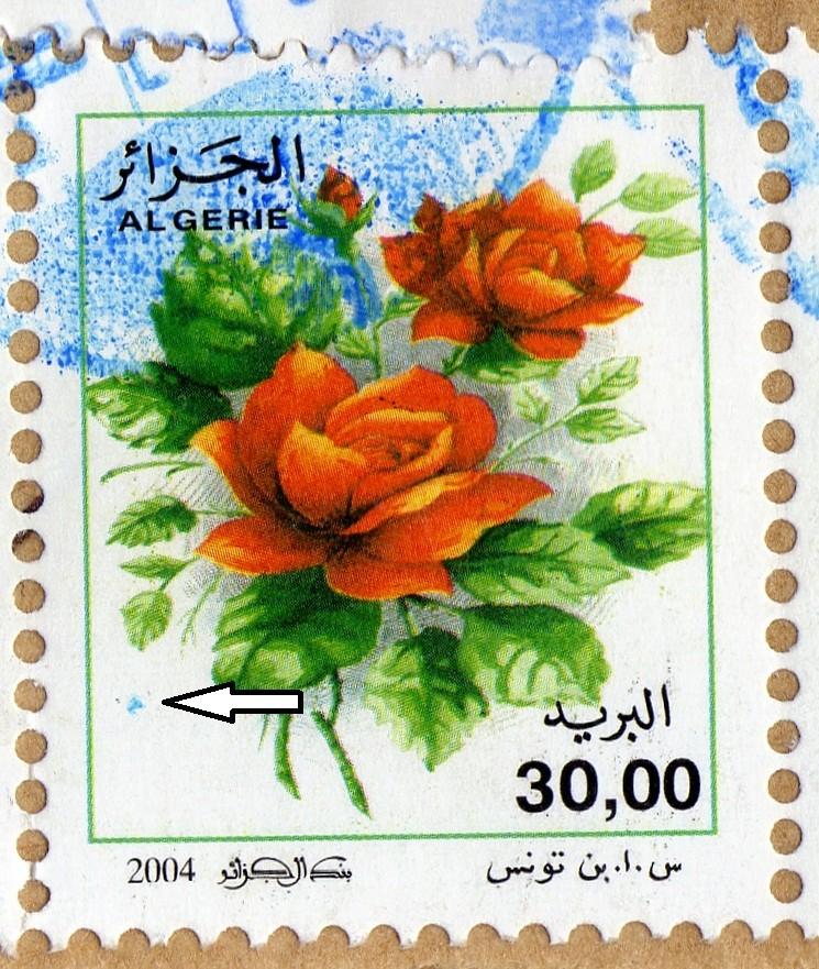 belles roses et autres Img01910