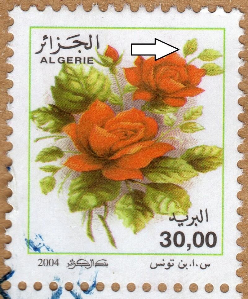 belles roses et autres Img02610