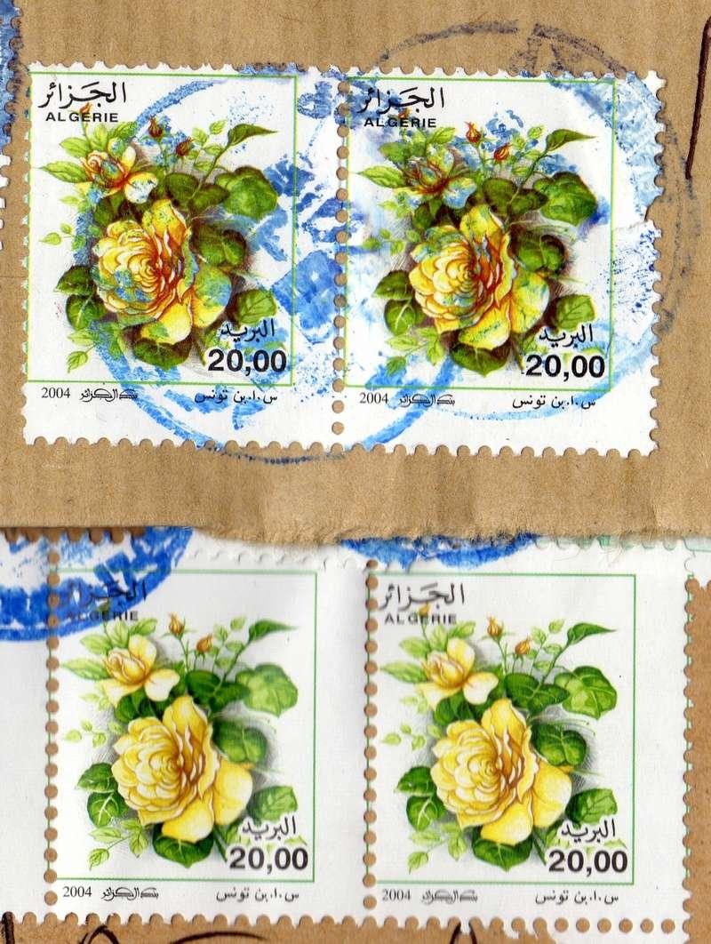 belles roses et autres Img20010