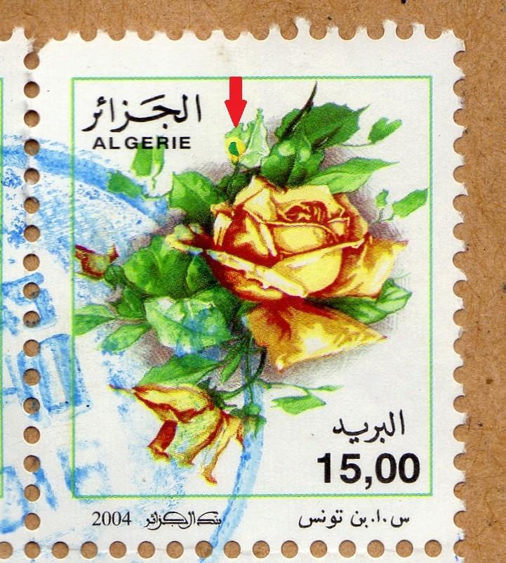 belles roses et autres Img27611