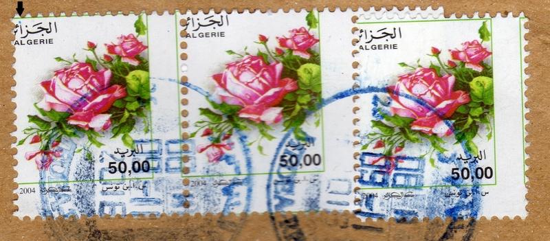 belles roses et autres Img27711