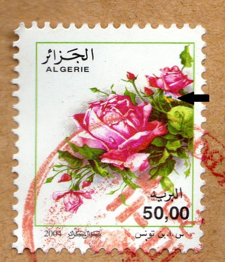 belles roses et autres Img27911