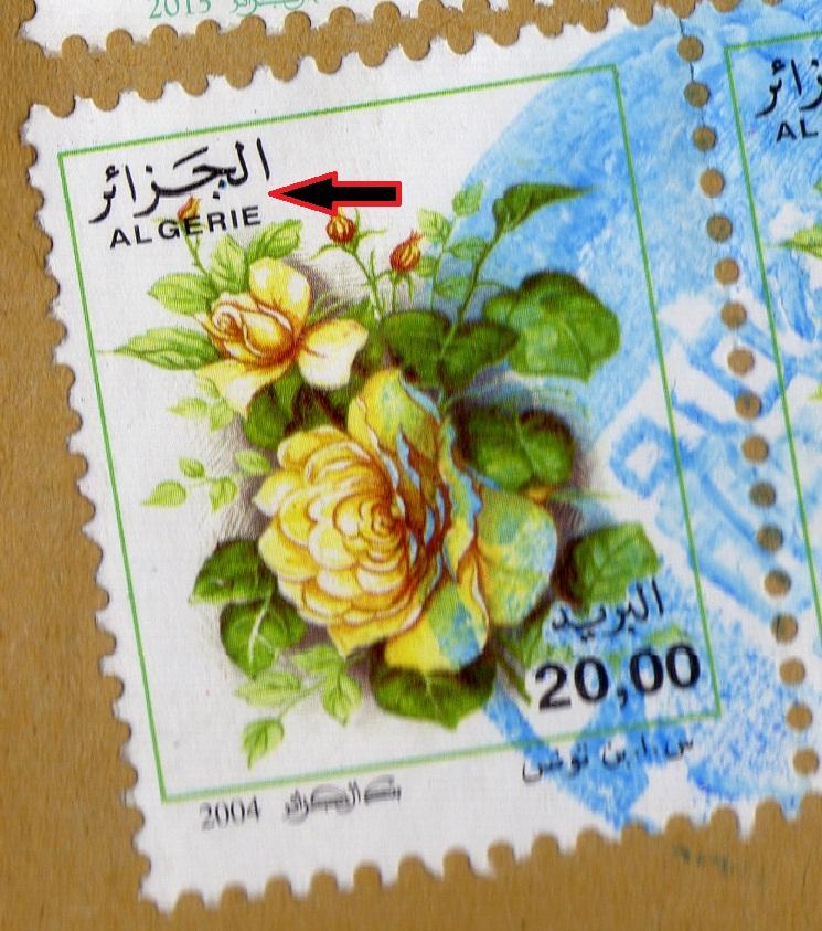 belles roses et autres Img28410