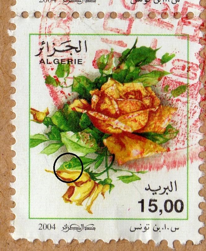 belles roses et autres Img28610