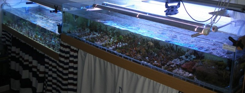 vends 2 aquariums de 293 et 265 litres 2_bacs10