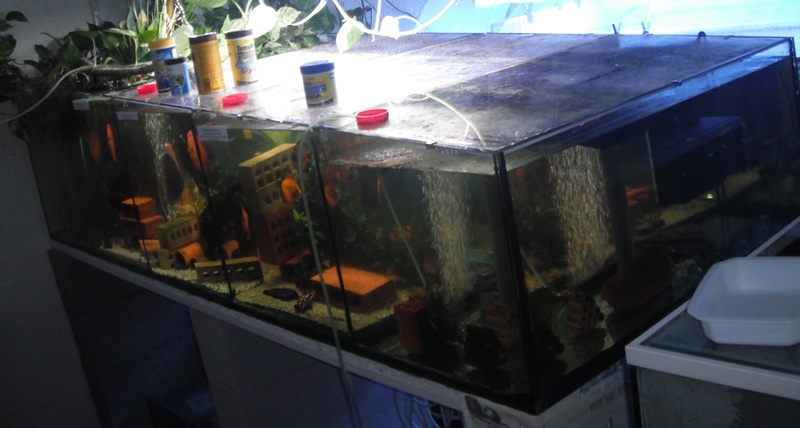vends aquarium 600 litres à 5 compartiments Aquari10