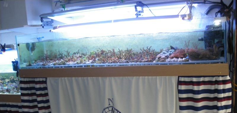 vends 2 aquariums de 293 et 265 litres Bac_du11