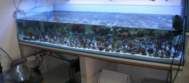 vends 2 aquariums de 293 et 265 litres Bac_du13
