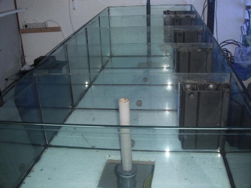 vends aquarium 600 litres à 5 compartiments Dscf5410