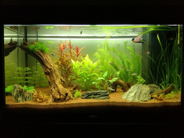Nouveau dans l'aquariophilie : Juwel Rio 125 Img_2013