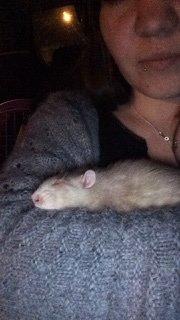 Rat en fin de vie.  15045610