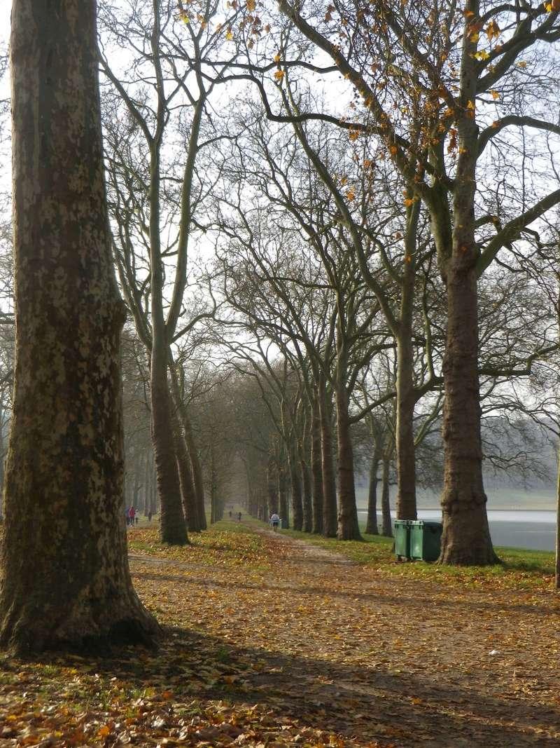 La Pièce d'Eau des Suisses, Versailles Imgp5230