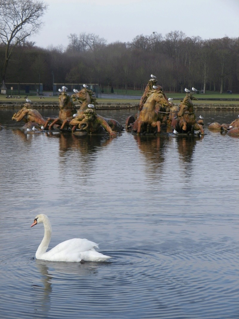 Versailles, le Grand Canal Imgp5818