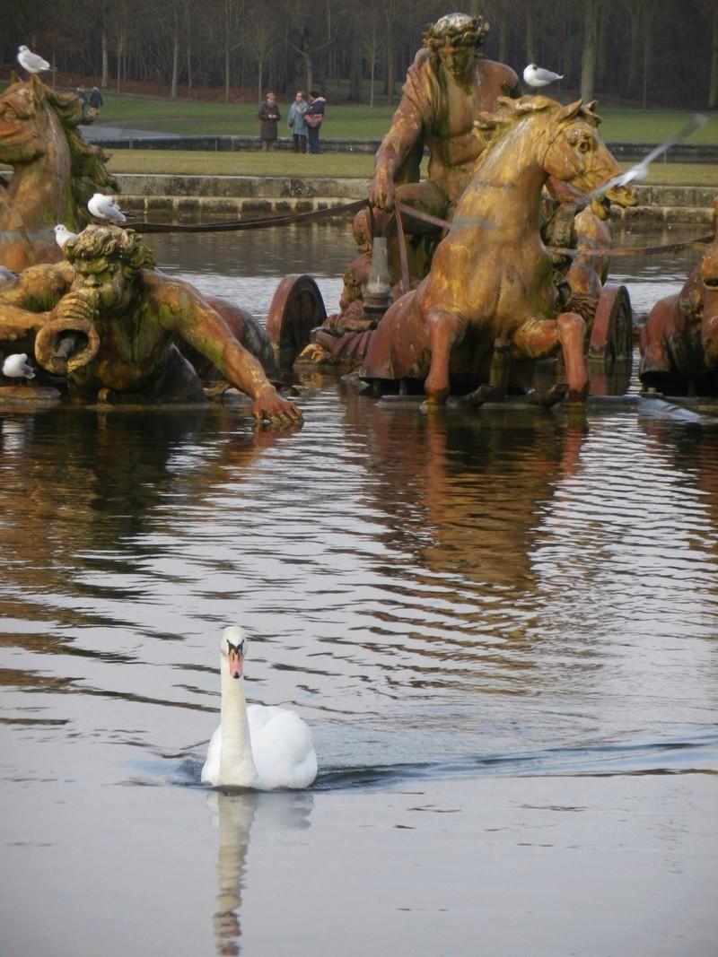 Versailles, le Grand Canal Imgp5819