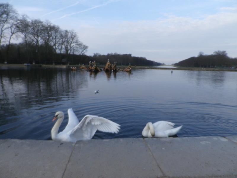 Versailles, le Grand Canal Imgp5820