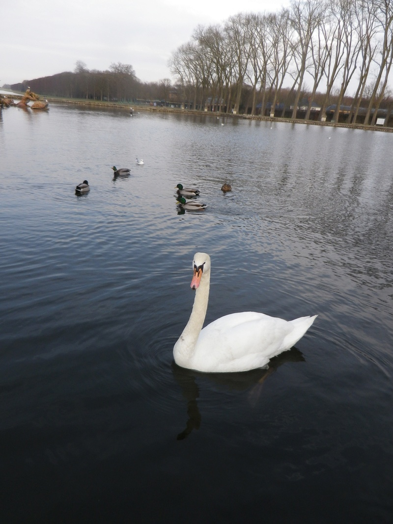 Versailles, le Grand Canal Imgp5821