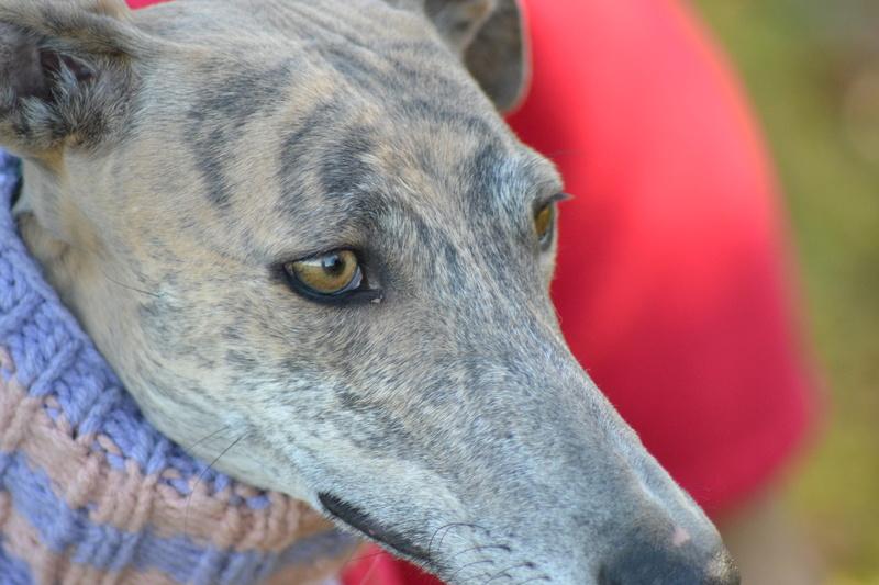 MUÑECA jolie https://www.facebook.com/lasolutionestenvous/photos/a.335547223147152.69476.335248206510387/1364482423586955/?type=3bringée bleue aux yeux gris verts Adoptée  - Page 3 Dsc_0012