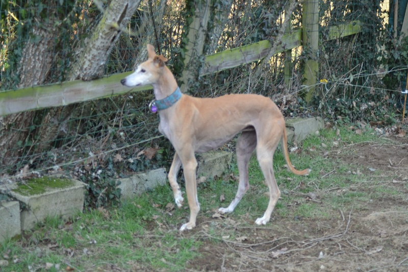 Cristina tourne une page elle est a l adoption , en Fa en Bretagne Adoptée  Dsc_0040