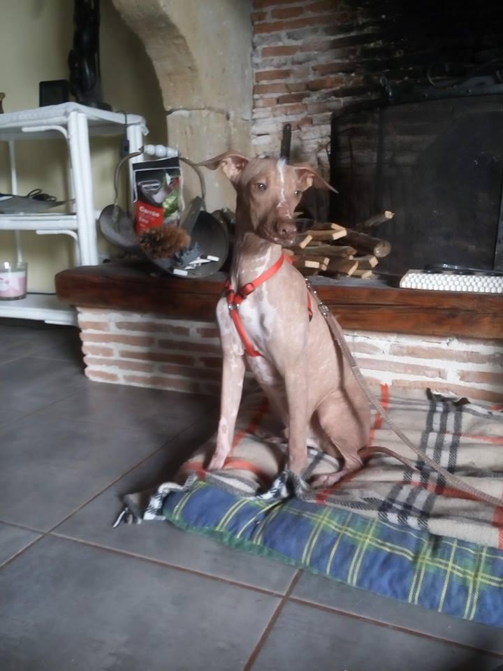 Mingus bébé nu Péruvien , 7 mois  Adopté  Galo_p10