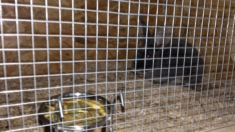 Les Rex de l'Ermite -- une histoire de lapin - Page 2 20161113