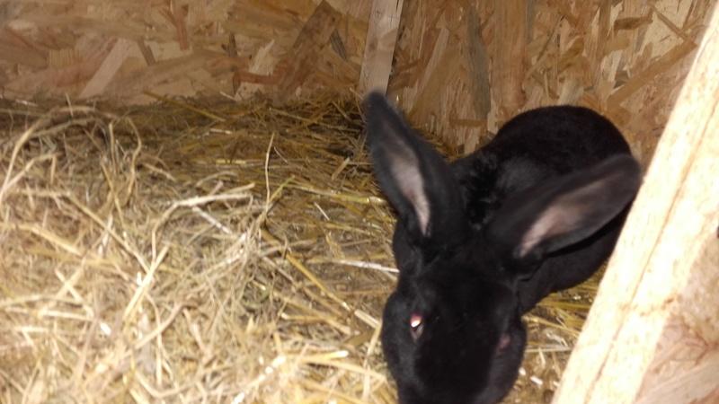 Les Rex de l'Ermite -- une histoire de lapin - Page 2 20161125