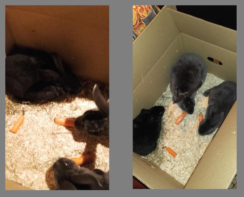Les Rex de l'Ermite -- une histoire de lapin - Page 2 Famill10