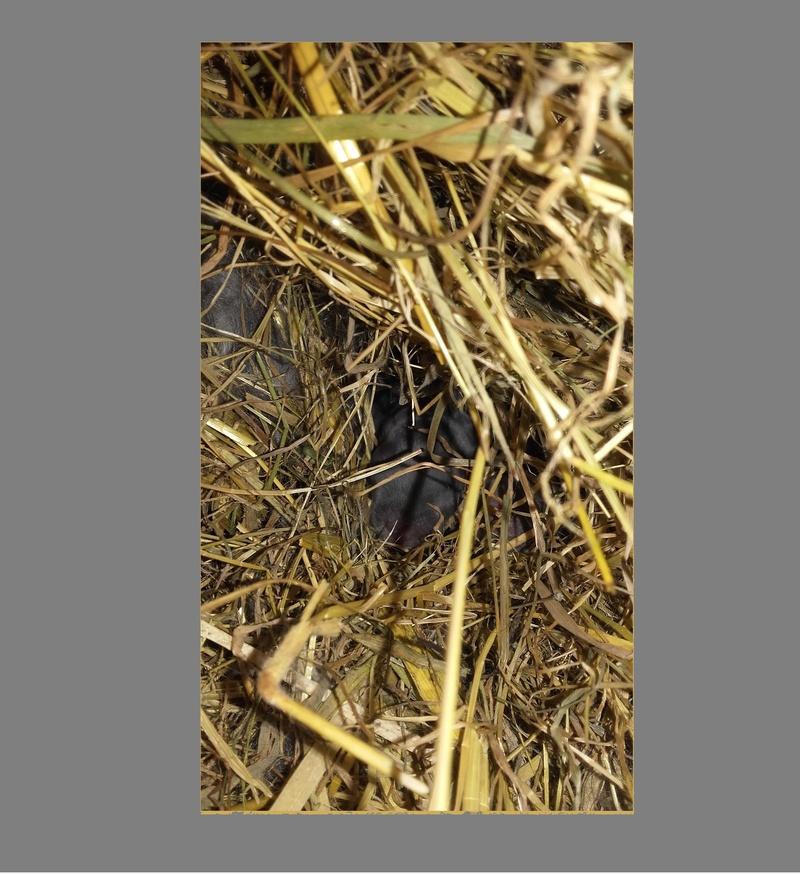 Les Rex de l'Ermite -- une histoire de lapin - Page 3 Lapera11