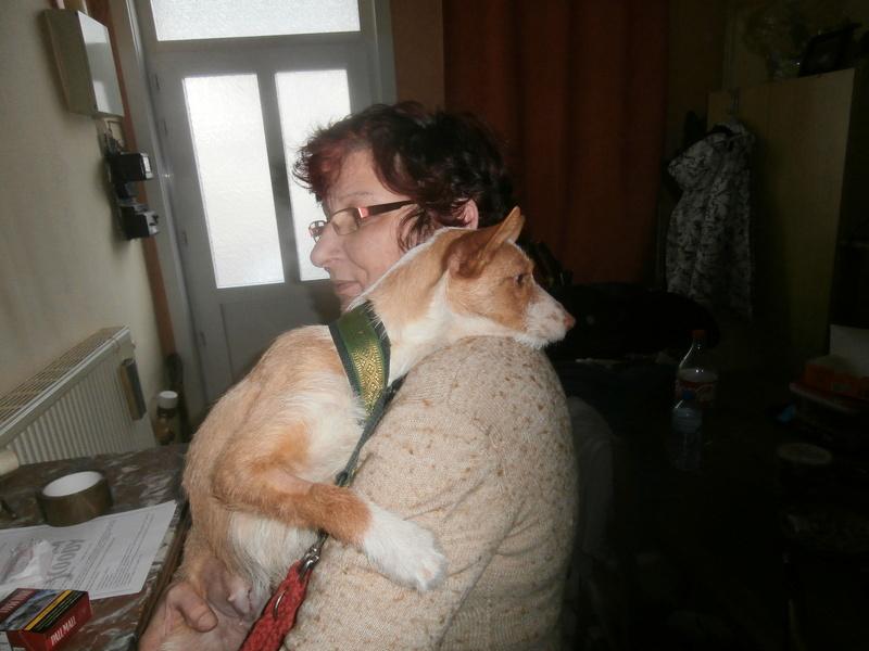 MELOSA petite podenca barbuda,un vrai bonheur ! Scooby France Adoptée   - Page 2 P3280012