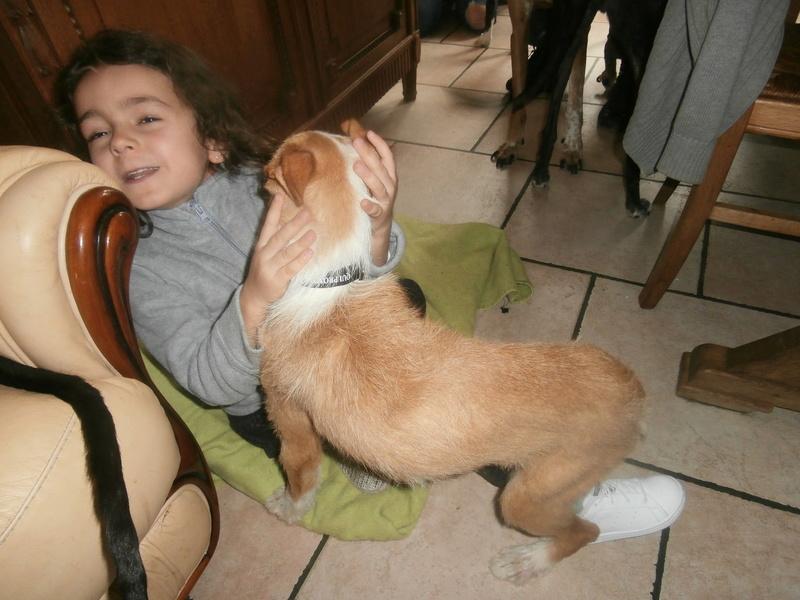 MELOSA petite podenca barbuda,un vrai bonheur ! Scooby France Adoptée   - Page 2 P4010012