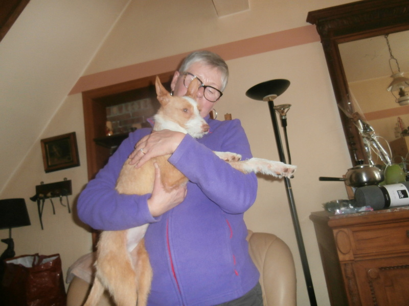 MELOSA petite podenca barbuda,un vrai bonheur ! Scooby France Adoptée   - Page 2 P4010016