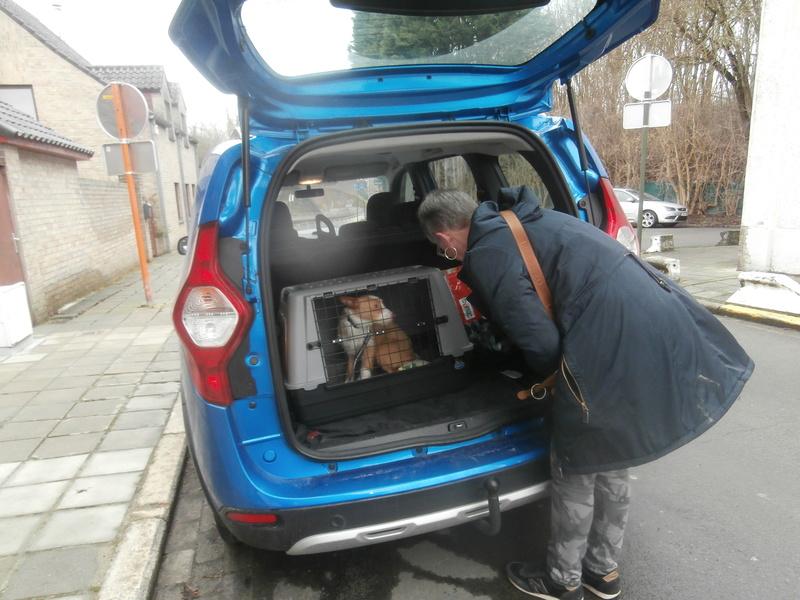 MELOSA petite podenca barbuda,un vrai bonheur ! Scooby France Adoptée   - Page 2 P4070013