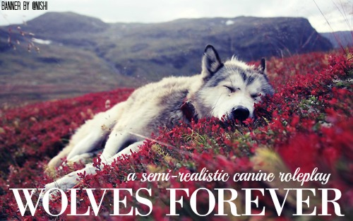 Wolf Rp Forever